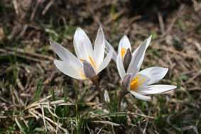 Весенний призыв: Сохраним жизнь первоцветам! (02.03.2010)