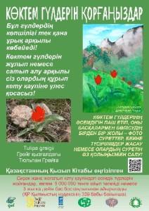 tulip kz site