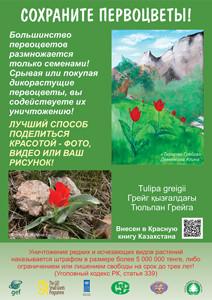 tulip-site-s-