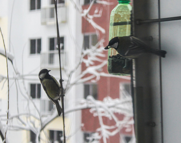 Сытой птице мороз не страшен