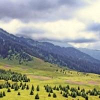 Петиция в защиту Кок-Жайляу на международном сайте AVAAZ
