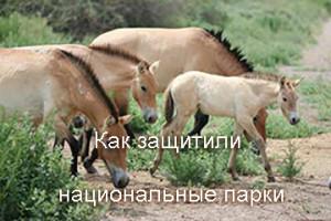 IMG_4234-koni-+