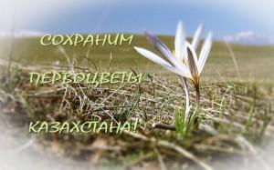 Сохраним первоцветы Казахстана! (смотреть видеофильм)