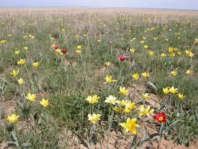 Всемирное наследие в Казахстане