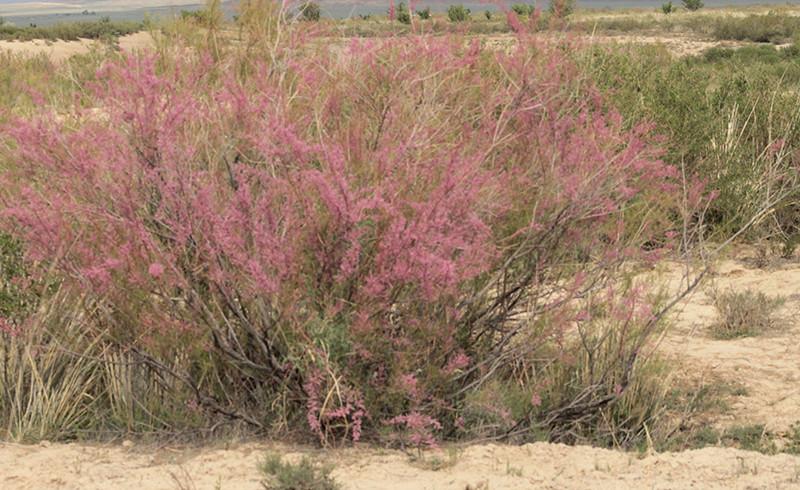 Растительный мир национального парка «Алтын-Эмель»