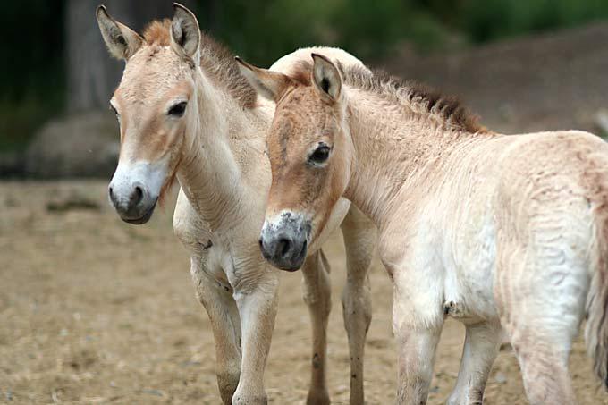 Животный мир национального парка «Алтын-Эмель»