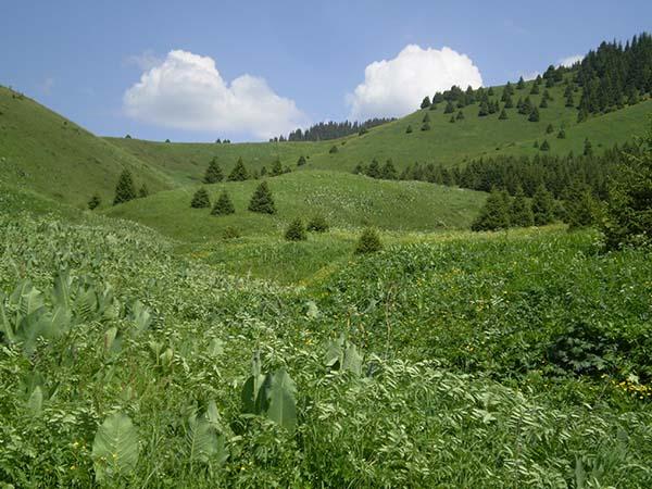 Обращение Немецкого союза охраны природы к Президенту Казахстана касательно проекта «Кок-Жайляу»