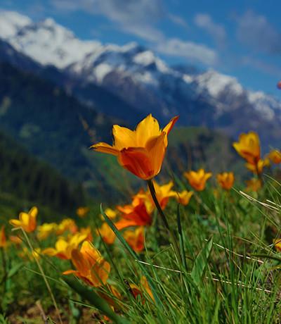 Spring in Zailiysky Alatau