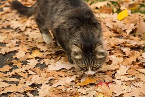 Пахнет осенью