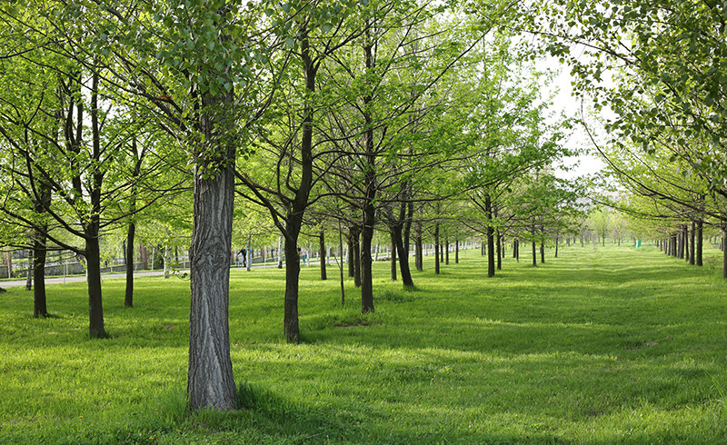 Информация о зеленом фонде Алматы открыта для всех!