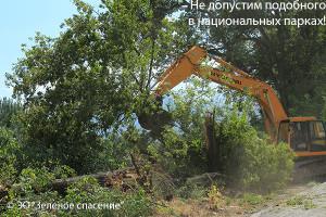 TreesIMG_0792