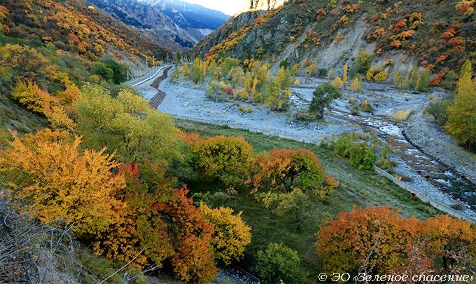 Сохранение биоразнообразия Северного Тянь-Шаня