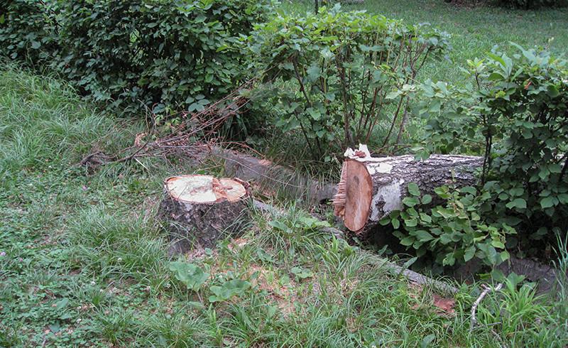 Как бороться с незаконной рубкой, обрезкой и сносом зеленых насаждений в Алматы