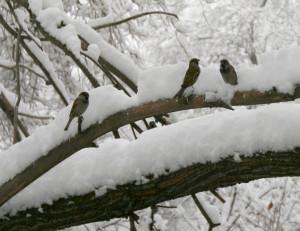 birdsIMG_1784w