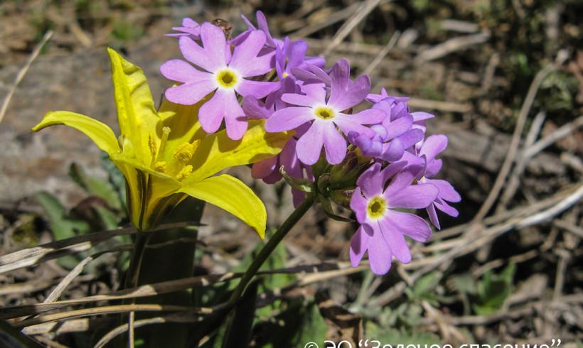 Алматинский городской творческий конкурс «Первоцветы Казахстана»