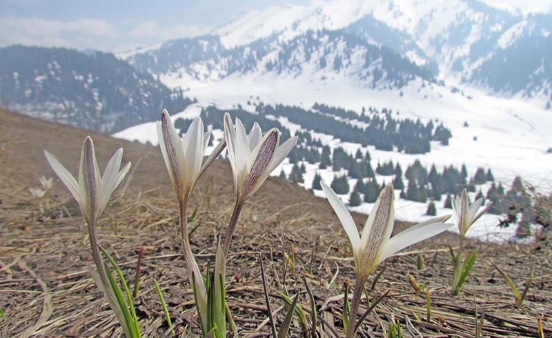 Фотовыставка Натальи Франковской «Наши горы,  такие близкие»