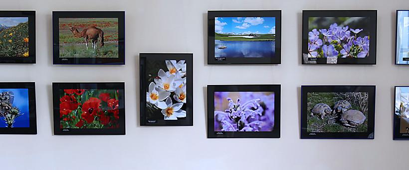 Фотовыставка «Зеленого спасения» на Станции юных натуралистов