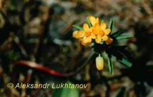 lux749s_leontitsa