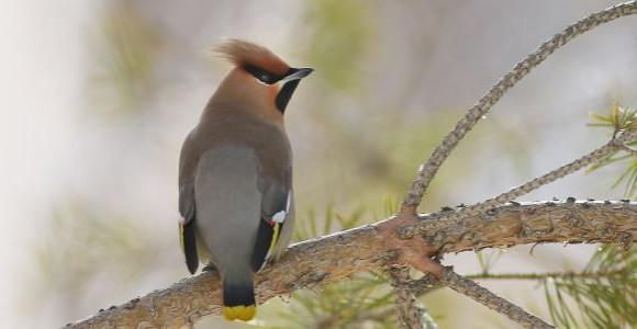 Акция по зимней подкормке птиц «Зерна тепла»