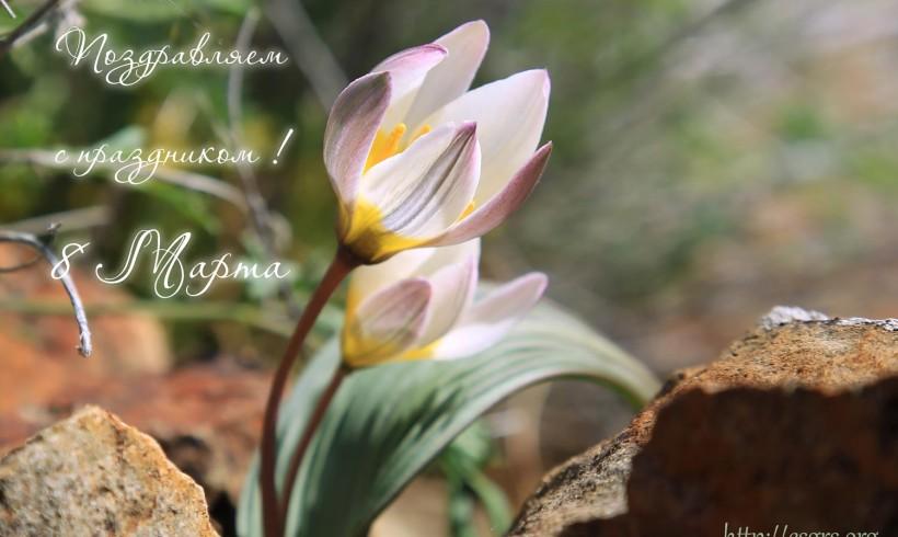 Поздравляем с праздником весны!