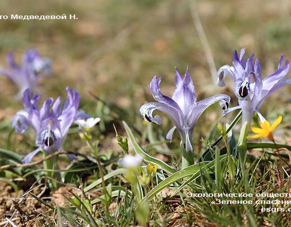 Апрельские экологические даты и праздники (экокалендарь)
