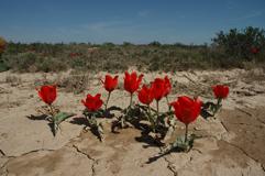 Бегущие от засухи