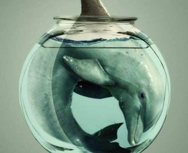 Открытое письмо по вопросу создания дельфинария в Астане