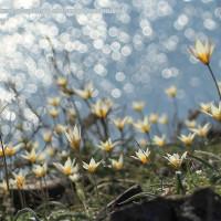 Когда приходит весна