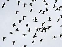 Запрет весенней охоты — важный шаг в сохранении биоресурсов
