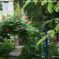 Легендарный цветочный двор продолжает цвеcти и благоухать