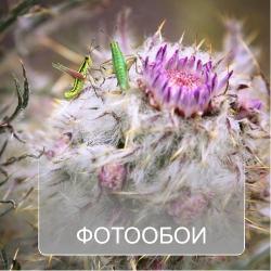 Фотообои