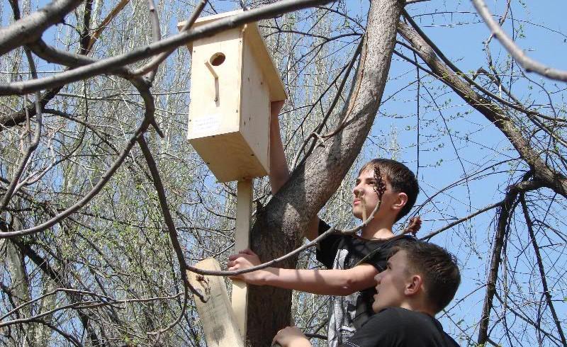 О городском празднике «Дом для пернатых друзей», посвященном международному Дню птиц