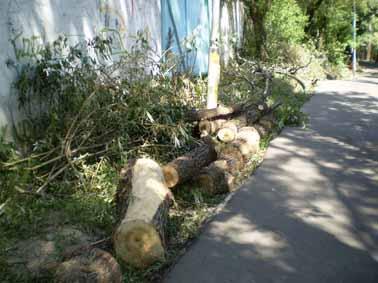 В Алматы растёт количество экологических нарушений