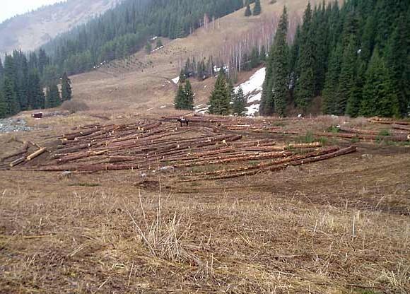 Незаконная рубка леса на территории национального парка_Фото И.Захаруполо