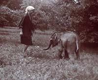 Кино о животных, или Памяти слона по имени Батырка