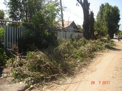 Уничтожение зеленых насаждений в Алматы