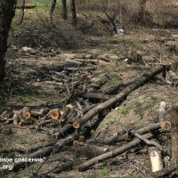 О новых правилах содержания и защиты зеленых насаждений
