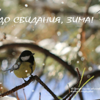 До свидания, зима!