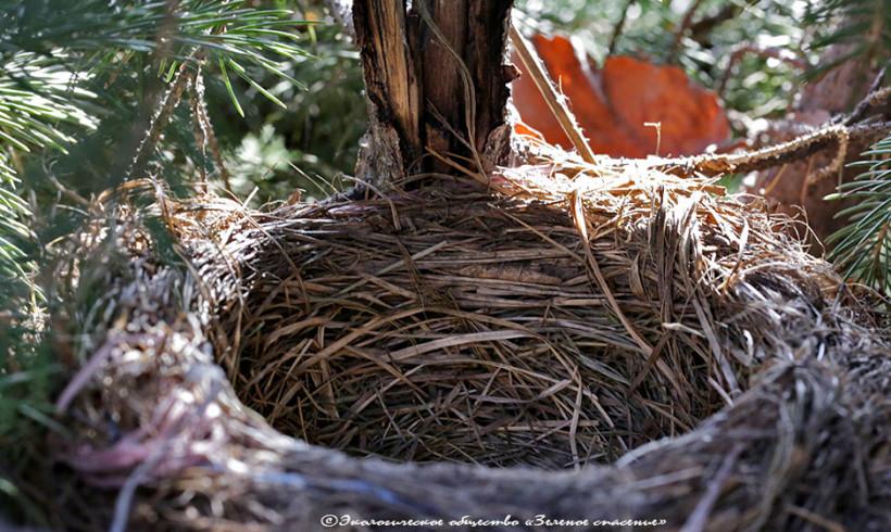 Строители гнезд
