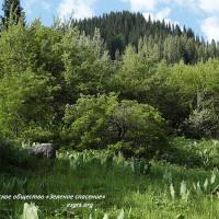 Краткий обзор судебной практики ЭО «Зеленое спасение» за 2019 год