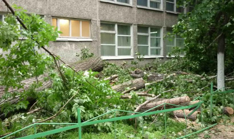 Требуем пересмотра «Правил содержания и  защиты зеленых насаждений г.Алматы»