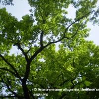 ПАМЯТКА «Как защитить зеленые насаждения Алматы»