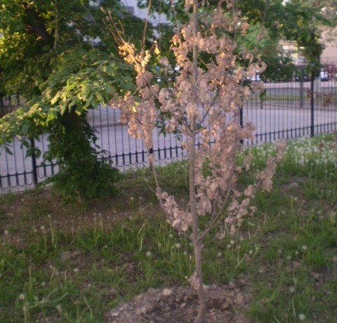 Is it possible to plant and grow a million trees in Almaty?