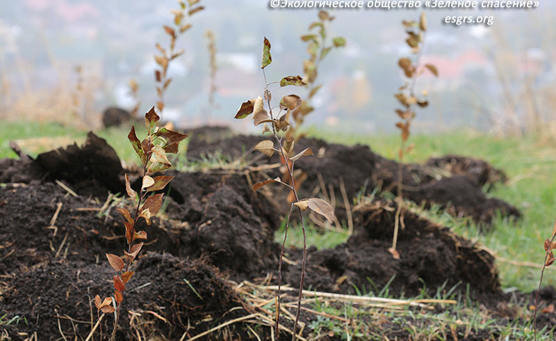 "Thousands of seedlings of Sievers apple trees and tulips of ""Nursultan Nazarbayev"" variety are abandoned on Kok-Tobe"