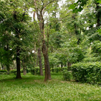 Можно ли посадить и вырастить в Алматы миллион деревьев?