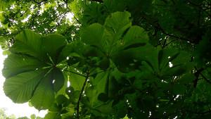 мое-любимое-дерево-2