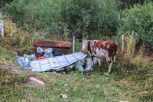 AH2A3027 Бутаковка 26_08_2019+jpgВыпас скота+C