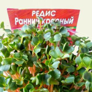 photo_микрозелень_редис_+1-1
