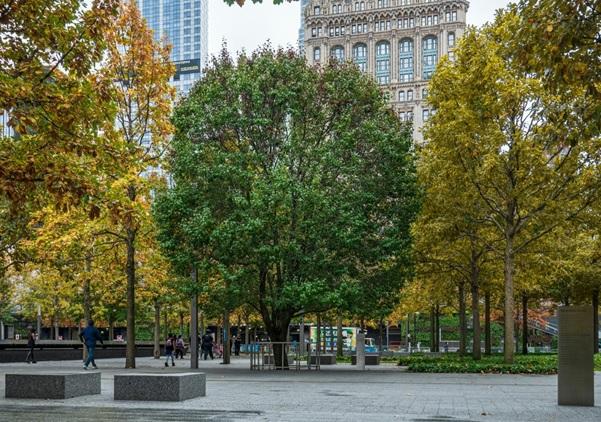 Миллион деревьев для Нью-Йорка