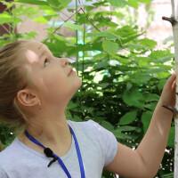Премьера!  Фильм «Сад прекрасных деревьев» о деятельности группы «Мое любимое дерево»